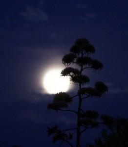 trăng